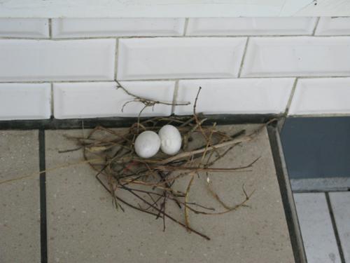 eggsmetro