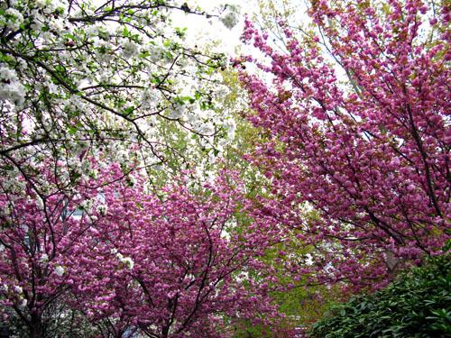 pinktrees2