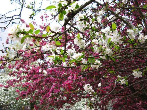pinktrees4