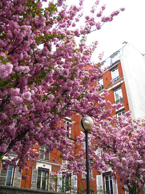 pinktrees5